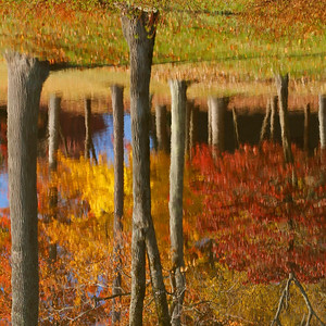 November 9, 2011 Fall Reflections