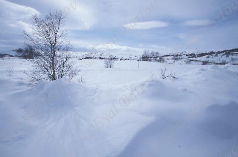 שלג נורווגיה.jpg