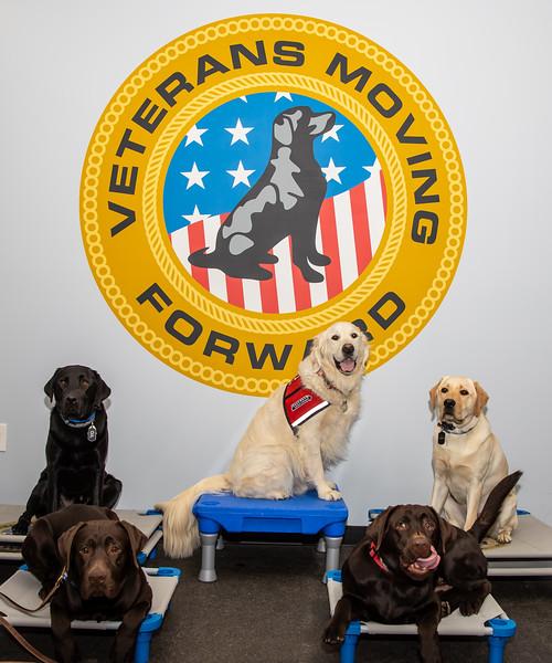 Dogs (149 of 282).jpg