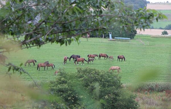 Heste i Torp