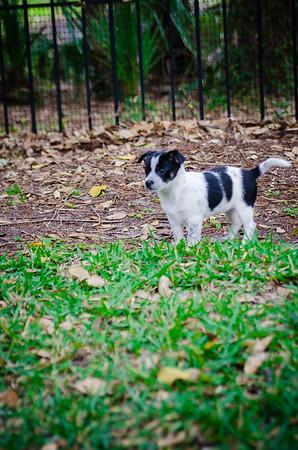 Puppies - 2 Months