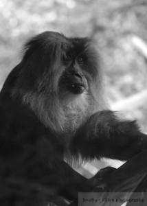 2007-08 Zoo