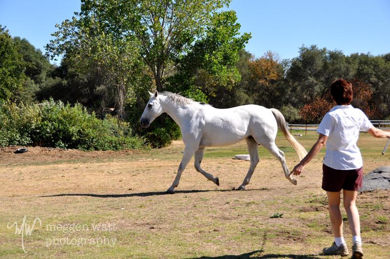 EB&Horses-068.jpg