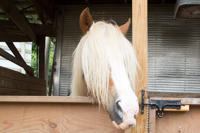 2019_National Riding Stables_LR Finals-6.jpg