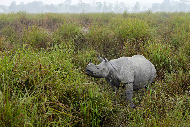 Rhino-and-its-grassland.jpg