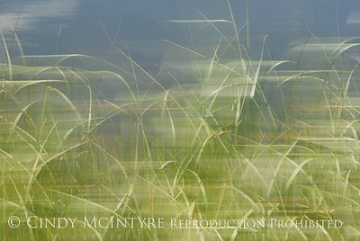 Blurry Grasses