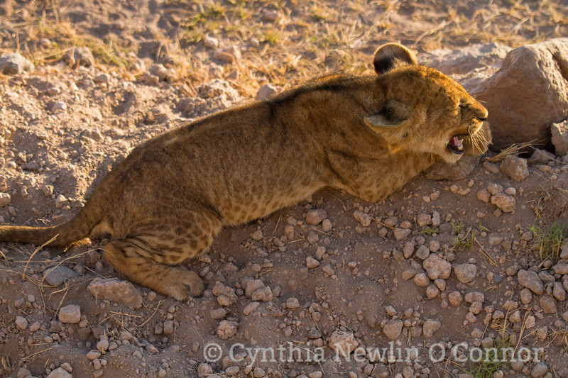 cat fight and more - 14.jpg