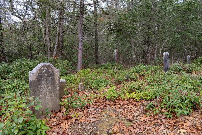 Cemetery Loop Trail, Transylvania County (1-27-19)