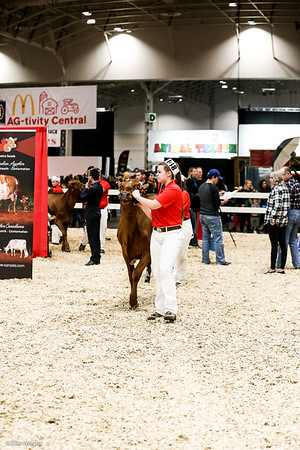 Ayrshire Showmanship and Candids