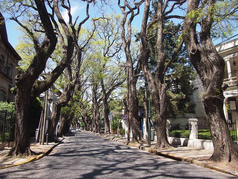 PA204600-tree-lined-street.JPG