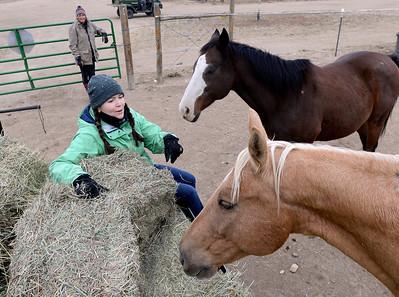 Photos; Colorado Horse Rescue Horses are Back Home