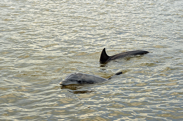 Jekyll Island Boat Tours Wedding - Dolphin 06-20-20