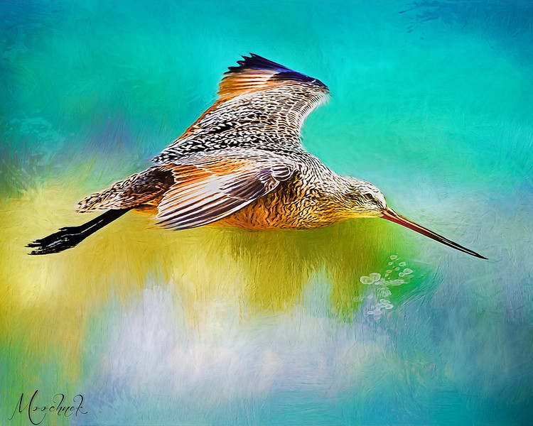 Colorsbird.jpg