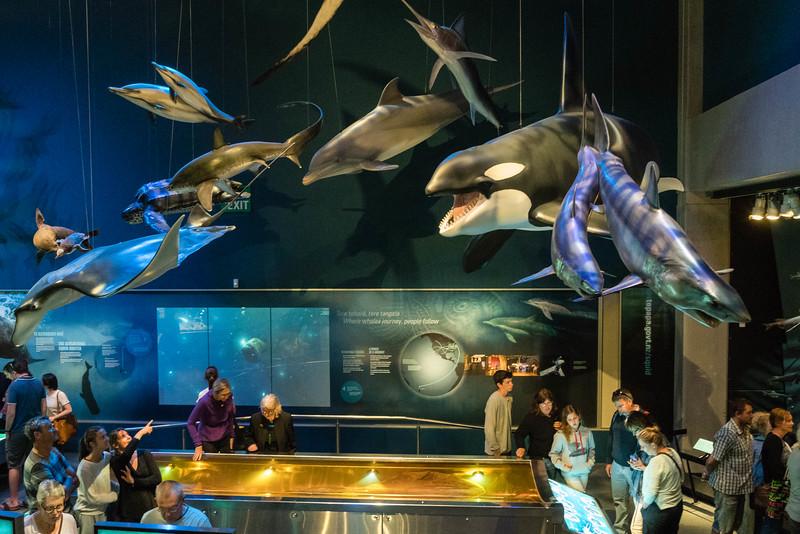 Ocean Exhibit