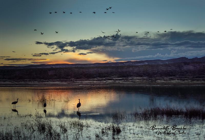 Last Light _ Bosque Apache National Park, New Mexico.jpg