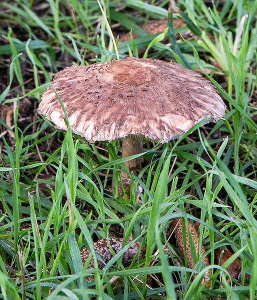 20191109- FNRC Fungi Walk - 022.jpg