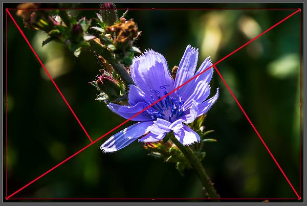 Crop Overlay Setting: (Golden) Triangle in Adobe ® Lightroom's Crop & Straighten Tool  Customizing the Grid Overlay