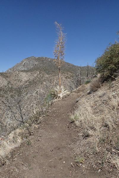20140316027-Strawberry Peak Trailwork