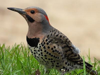 20200519 Beavermead Birds