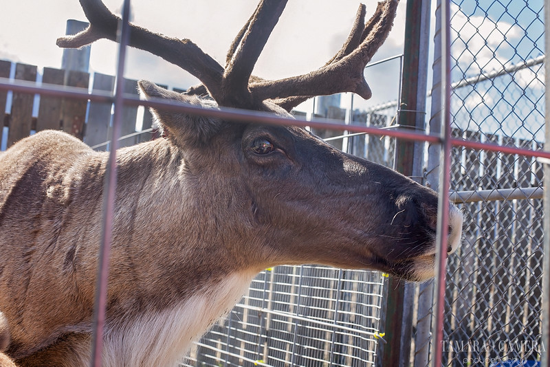 Reindeer Farm3-2.jpg