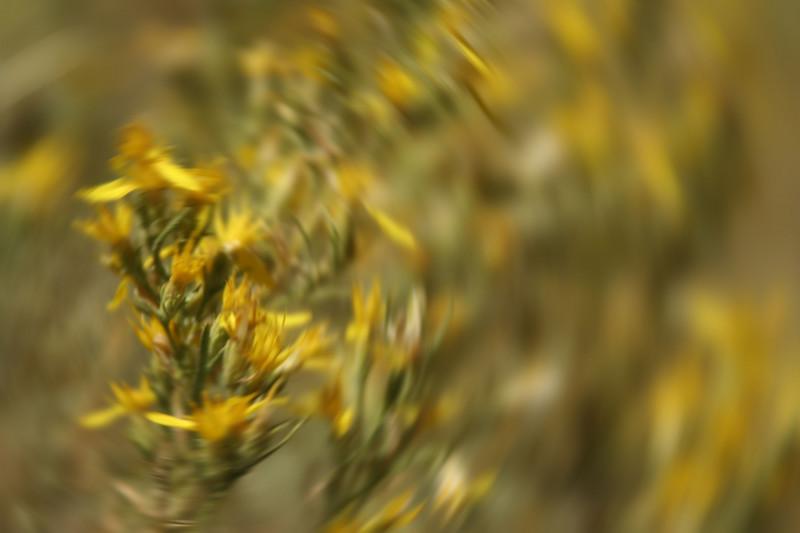 YNP 332radial blur.jpg