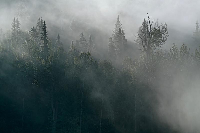 Muskwa Mist