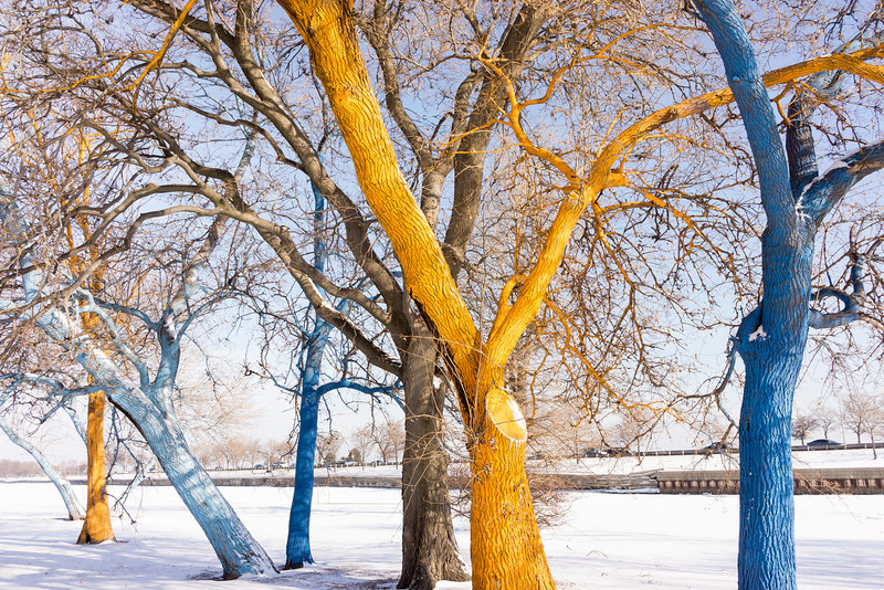 The Colorful Trees