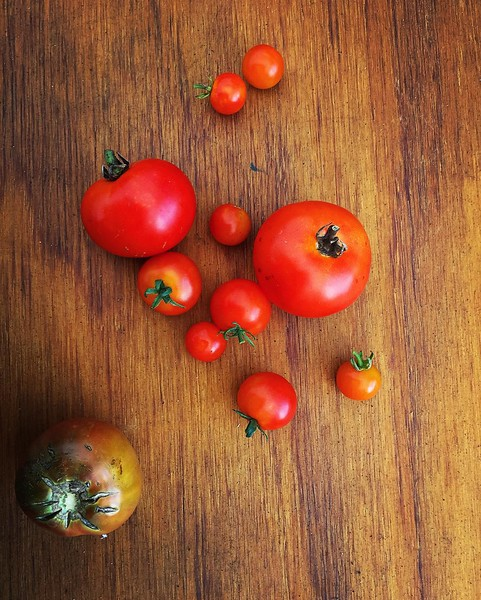 Hydroponic_tomatoes_from_Sweetgrass_Farms._Very_interesting_way_of_farming__as_there_s_no_soil_it_doesn_t_require_pesticides_and_uses_90__less_water_without_run_off_to_nearby_water_sources._As_the_farm_grows_they_can_just_build_taller_instead_of_requ.jpg
