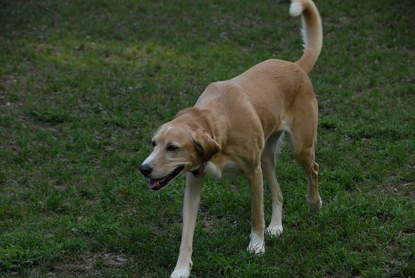 2011-08-30 Central Dog Park