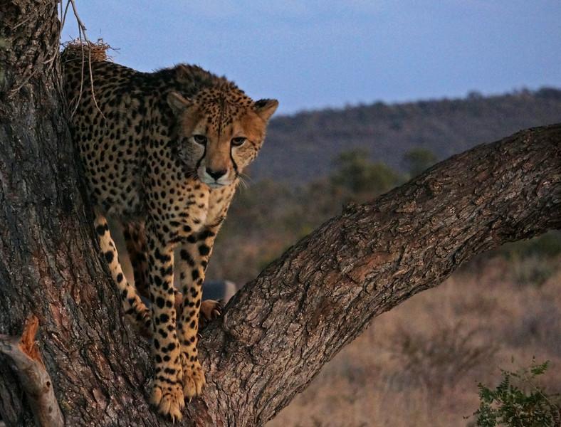 TAU Game Lodge Madikwe Game Reserve Winter