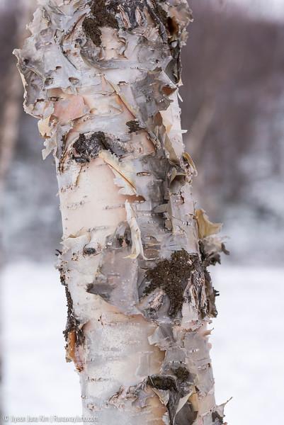 Nov.11_Utsjoki-6105875.jpg