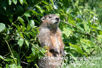 05/25/2018 Kings Farm Park, Nature and Wildlife Photos, Rockville Maryland, Photography by Jeffrey Vogt
