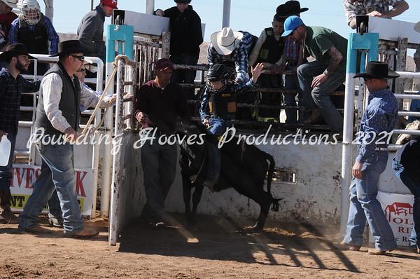 2-16-13 Sat Steers