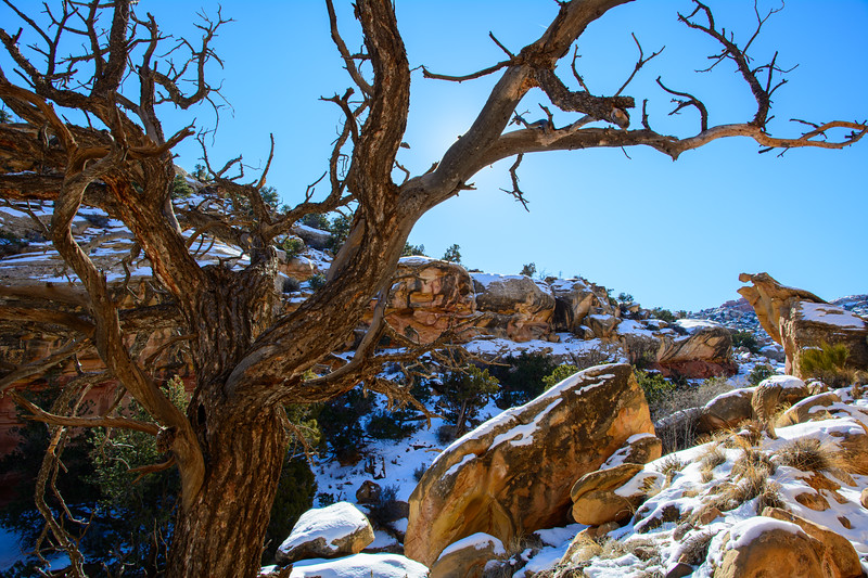 Dead Tree in Capitol Reef