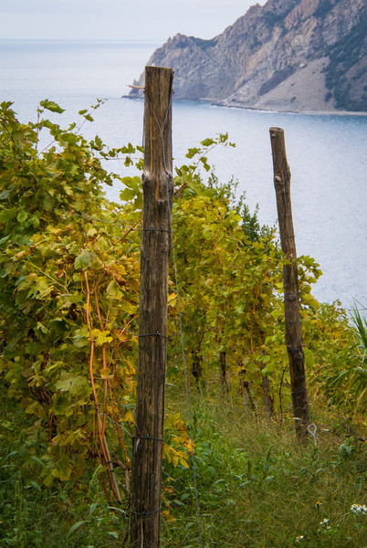 Our hike to the second town, Vernazza, took about 1 1/2 hours