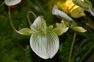 Chicago Botanic Garden_Orchid Show