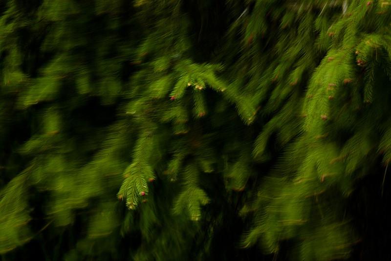 Dag_029_2012-maj-10_6024.jpg