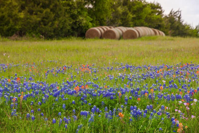 2016_4_9 Texas Wildflower Shoot-8565.jpg