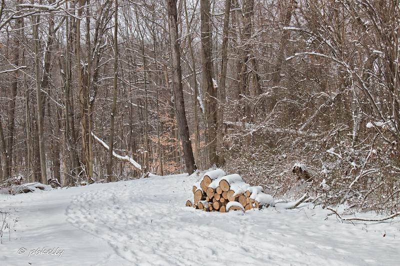 snowy woodpile filter 013017.jpg