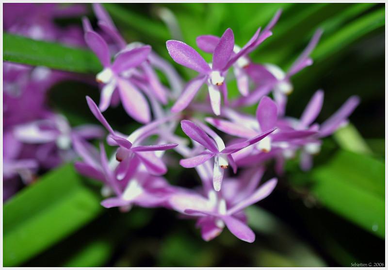 Orchid17_082209.jpg