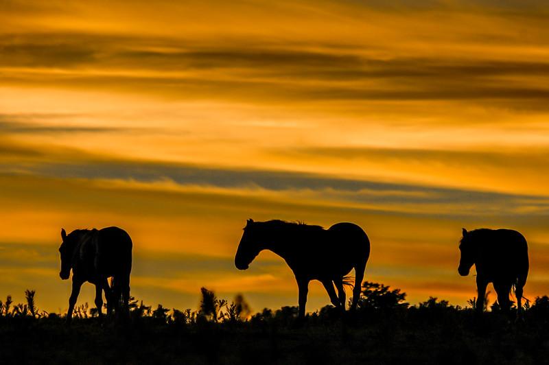 Wild Horses Under Sunset Sky #3