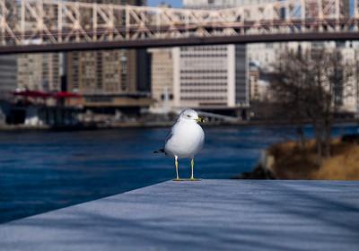 Roosevelt Island 2014