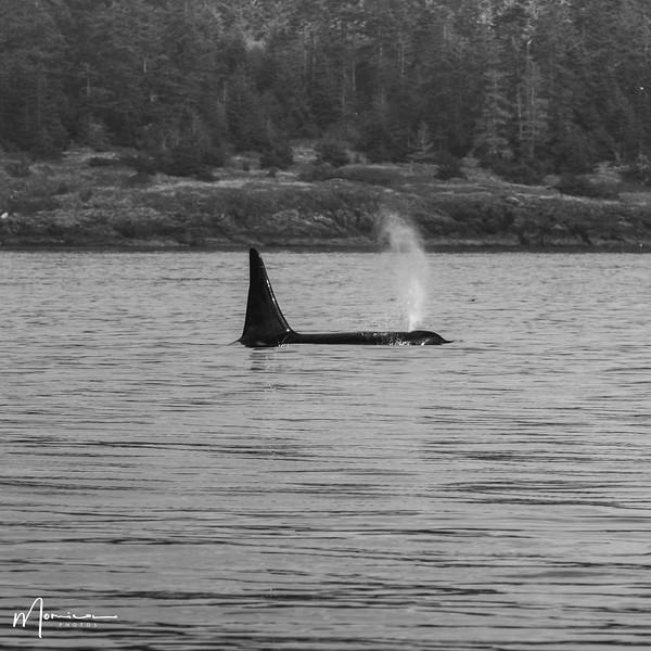 2019-08-31 - Whale Watching-1971_edit.jpg