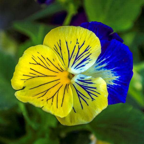 FlowerBackyardErieCO-001