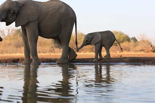 Elephant Hide and Lodge Mashatu Botswana 2017