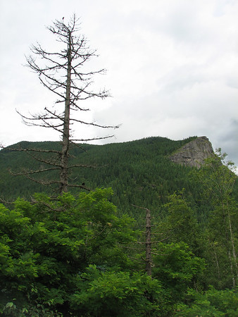 Trailfest - Rattlesnake Mountain Scenic Area - 7-21-07