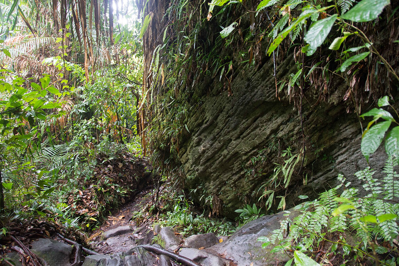 Borneo-2014-122.jpg
