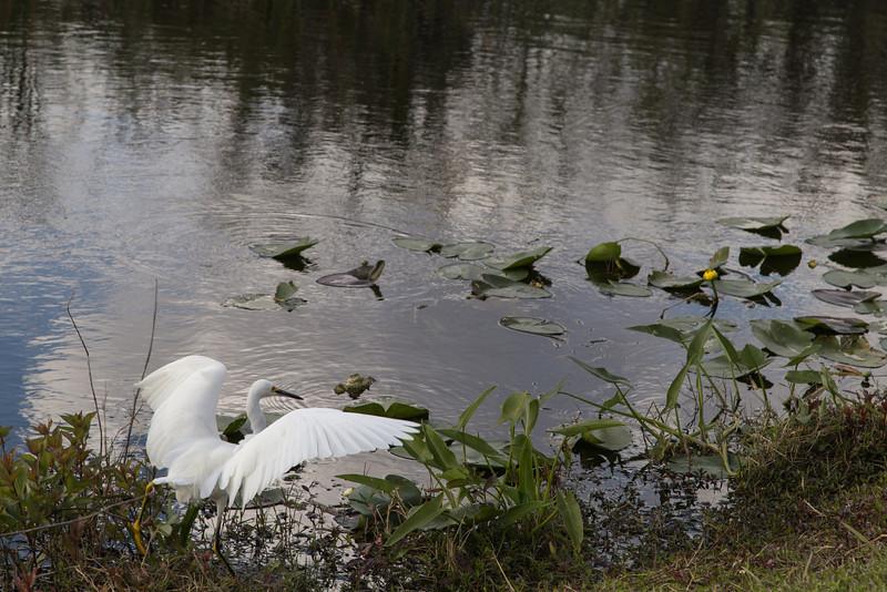Everglades NP-0249-Select_E.jpg