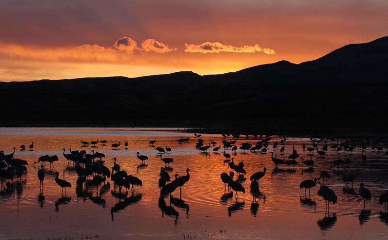Cranes at sunset rays 0007115.jpg