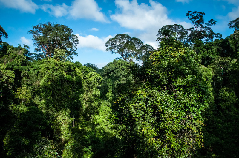 VIEW - Danum Valley--3.jpg